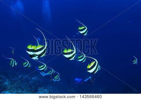 Fish in sea and scuba divers