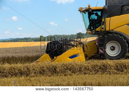 Yellov Harvester On Field Harvesting Gold Wheat