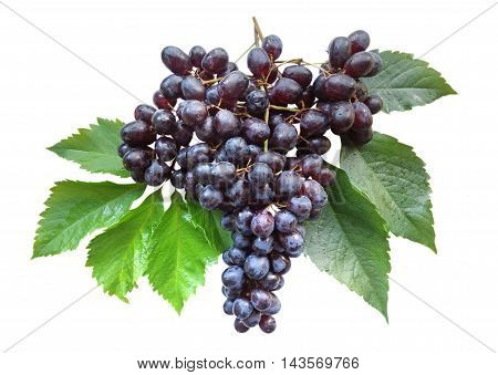 Fresh bunch of grapes with leaves isolated on white background. Clipping path included.