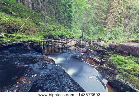 Fast stream in the woods