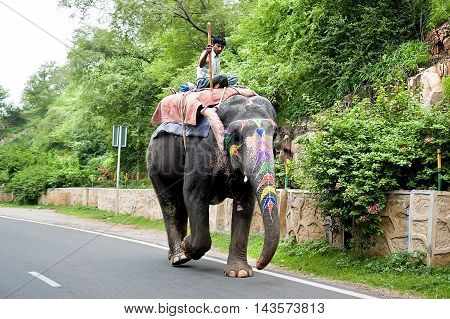Jaipur, Rajasthan, India - July 28, 2011: Unidentified man rides elephant along the street. Elephants are used for rides and other tourist activities in Jaipur