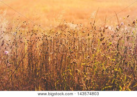 Dry Grass In Bright Sunlight. Sunny Yellow Dry Grass Background. Autumn Theme