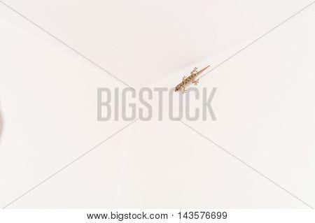 Gekko small iguana on a white house wall