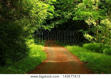 a picture of an exterior Pacific Northwest forest walking path  in spring