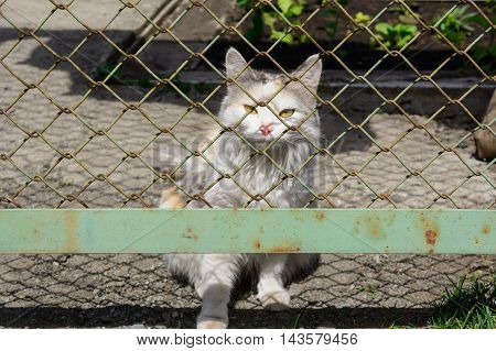 Stray young white and ginger cat behind the wire-mesh fence