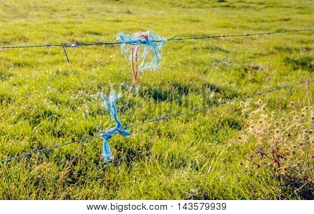Closeup of the barbed wire of a pasture fence early in the morning. Pieces of frayed blue and orange polyester rope are on the wire. Dewdrops are still on the grass.