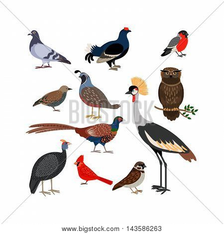 Vector bird isolated icons. Owl and pheasant, bullfinch and crane