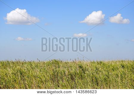 Beautiful summer landscape with long green grass, fluffy clouds and clear blue sky. Sunlight, meadow and clear sky