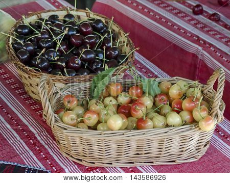 Feast of cherry fruit in the Kyustendil, presentment out their production raw fruit, Bulgaria
