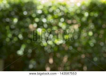 Abstract blurred green background - can be used for display or montage your products