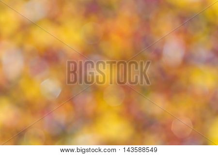 Abstract natural blurred background. Element of design.