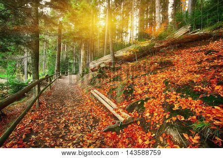 trail in autumn forest. Fallen leaves. Colorful forest. Sunset