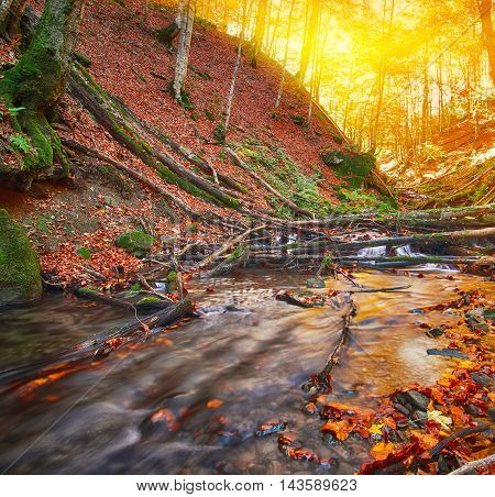 rapid mountain river in autumn. Fallen leaves. Sunset time