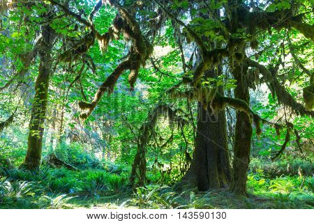 Forest in Olympic National Park, Washington
