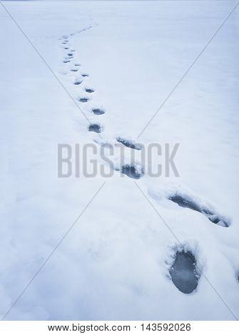 Frozen footprints in the snow
