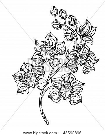 artistically painted contour black orchid on a white background. Design with orchids. Tattoo style. Dotwork.