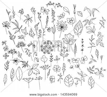 Set with different wild flowers, Contour,black and white.