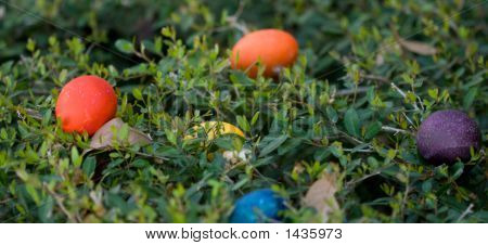 Colored Easter Eggs In Bush