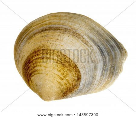 macro shot of a sea shell in white back