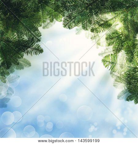 Christmas Background. Green Xmas Tree Twig on Blue Sky