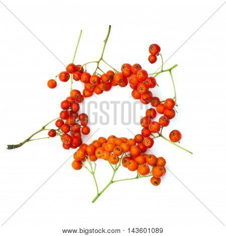 Isolated frame of juicy rowanberries on a white background