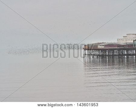 A flock of starlings off North PierBlackpool
