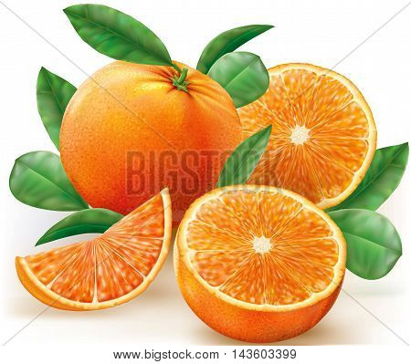 Vector illustration fresh oranges fruits with leaves