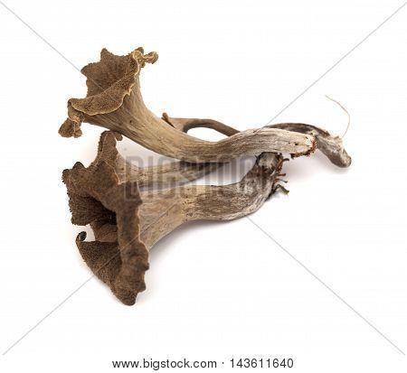 Trumpet Of The Dead Edible Mushroom