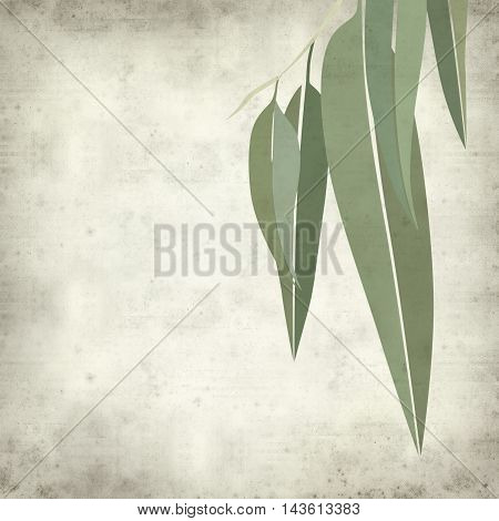 textured old paper background with eucalyptus leaves illustration