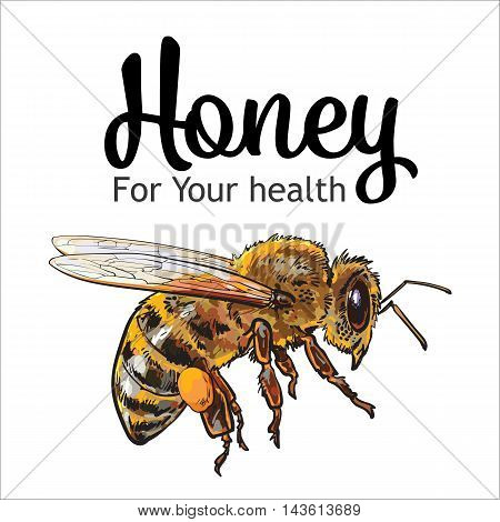 Flying honey bee, sketch style vector illustration isolated on white background. Realistic drawing of a bumble bee flying to the hive, apiary icon