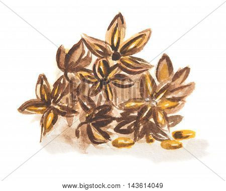 Watercolor star anise set. Isolated spice on white background. Seasoning for meal or dessert.