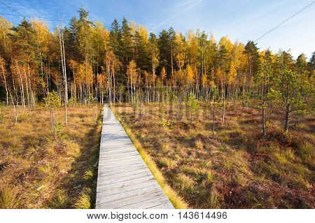 Wooden Path Way Pathway From Marsh Swamp To Forest. Autumn Nature Forest Landscape. Wooden Board Boarding On Ground Near Bog Swamp. Nobody