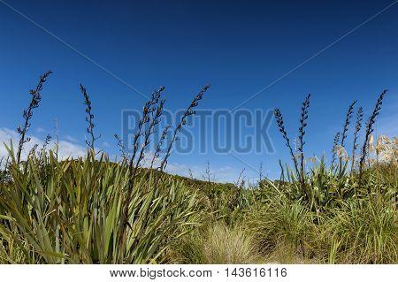 Rough Grassland At Tauparikaka Marine Reserve, Haast, New Zealand