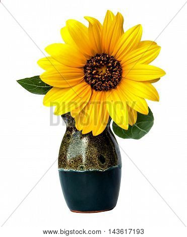 Jerusalem artichokes delicate yellow flowers and petals isolated in a small ceramic vase