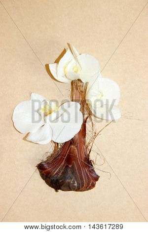 bouquet of orchids in a vase made of palm peel onions