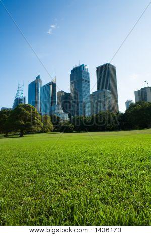 Sydney Skyline From The Park