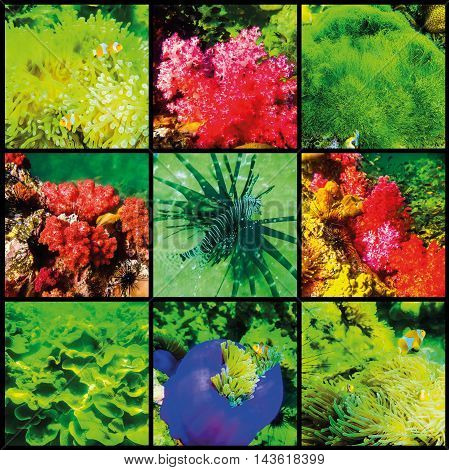 The collage of corals and fish in the Andaman Sea in Thailand
