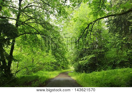 a picture of an exterior Pacific Northwest forest hiking path
