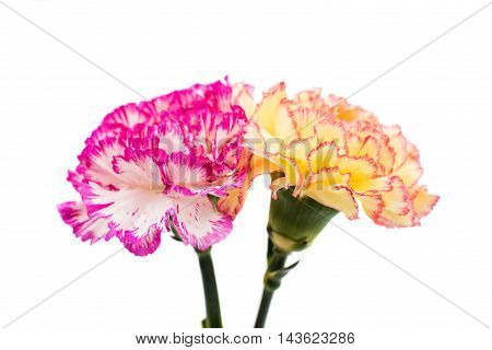 carnation decoration  bouquet on a white background