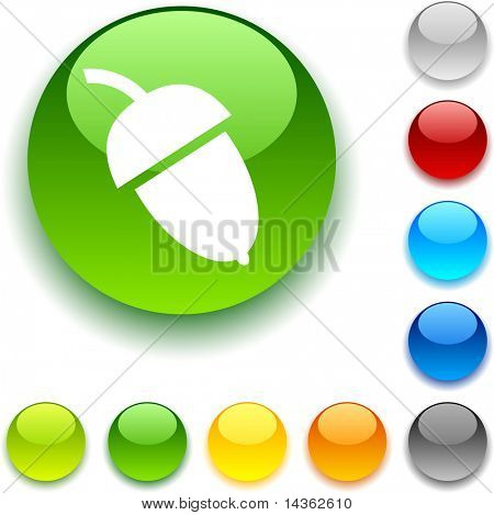 Acorn  shiny button. Vector illustration.