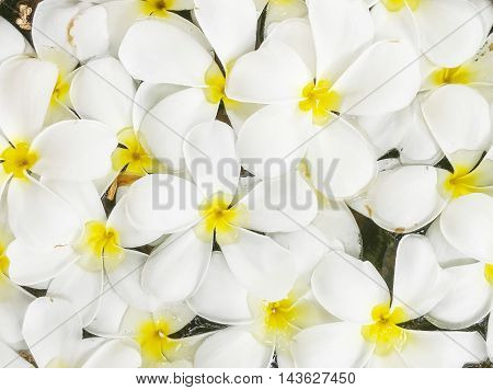 Closeup group of white fallen flower float on water in basin for decoration in the garden textured background
