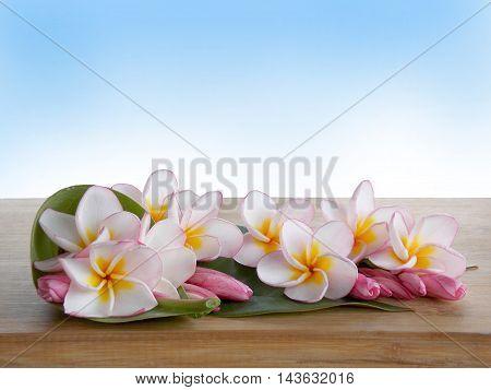 Beautiful tropical frangipani on wooden background on blue background