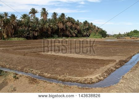 Fields and Agriculture and Harvest in Sudan