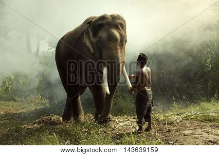 Young Elephant with man mahout at surinThailand
