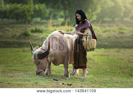 Beautiful women and albino dwarf buffalo on the field