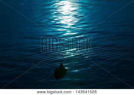 Material obtained by photographing the duck of the lake.