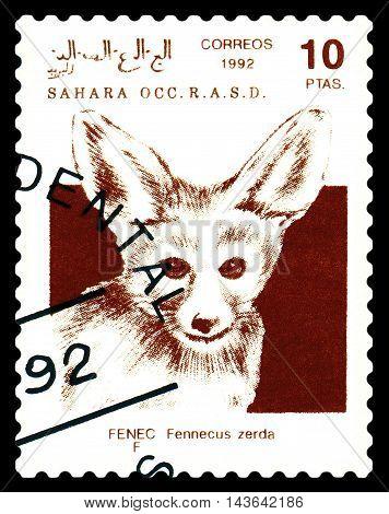 STAVROPOL RUSSIA - August 21 2016: A stamp printed in Sahrawi Arab Democratic Republic (SADR) shows Fennec Fox (Vulpes zerda) circa 1992