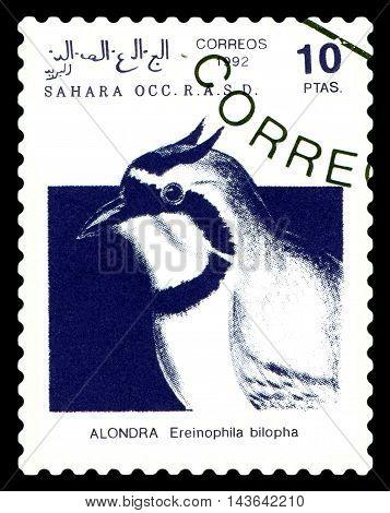 STAVROPOL RUSSIA - August 21 2016: A stamp printed in Sahrawi Arab Democratic Republic (SADR) shows Temminck's Lark (Eremophila bilopha) circa 1992