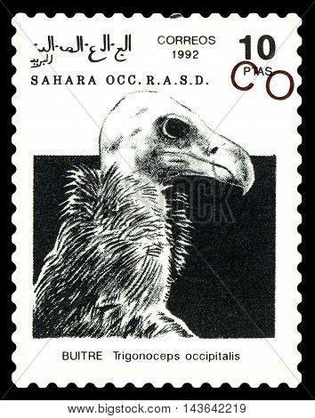 STAVROPOL RUSSIA - August 21 2016: A stamp printed in Sahrawi Arab Democratic Republic (SADR) shows White-headed Vulture (Trigonoceps occipitalis) circa 1992