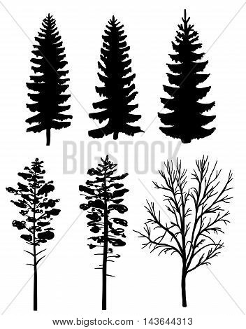 Set of black silhouettes of forest trees, fir and pine